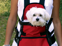 Pet Carrying Bags