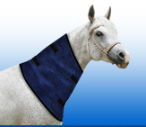 Aqua Coolkeeper for Horses